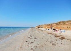 Витино семейный отдых с собакой на пляже