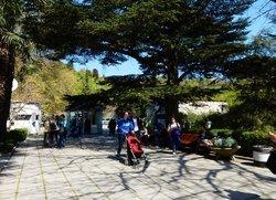 Никитский ботанический сад при входе