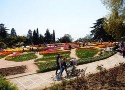 Тюльпаны в Крыму Никитский ботанический сад