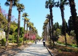 Пальмовая аллея в Ялте пгт.Никита ботанический сад