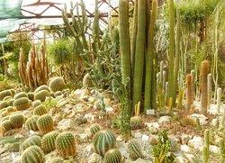 Кактусовая оранжерея Райский сад Никитского ботанического сада