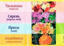 Когда что цветет в Никитском ботаническом саду