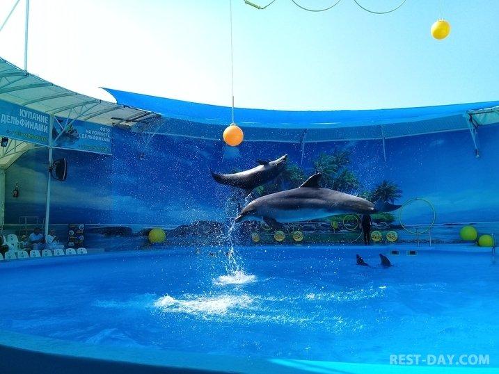 """дельфинарий """"Немо"""" в Феодосии"""