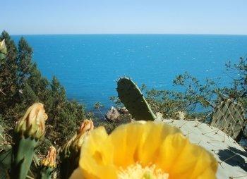 Отдельно стоящий домик над морем в Береговом Кастрополь до 6 чел